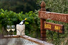 0317_d800b_Byington_Winery_Los_Gatos_Commercial_Photography