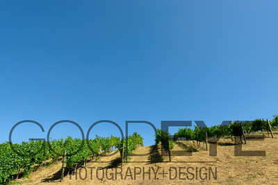 1477_d800a_Byington_Winery_Los_Gatos_Commercial_Photography