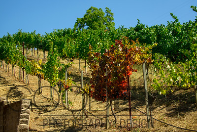 0384_d800b_Byington_Winery_Los_Gatos_Commercial_Photography