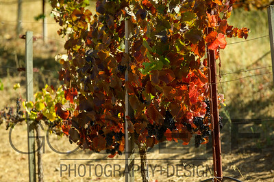0385_d800b_Byington_Winery_Los_Gatos_Commercial_Photography