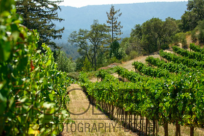 0365_d800b_Byington_Winery_Los_Gatos_Commercial_Photography