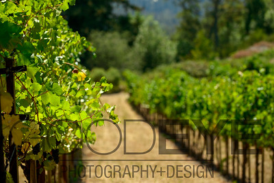 0361_d800b_Byington_Winery_Los_Gatos_Commercial_Photography