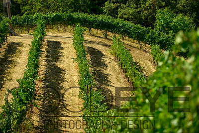 0378_d800b_Byington_Winery_Los_Gatos_Commercial_Photography