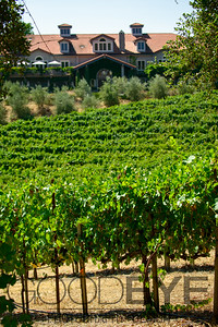 0364_d800b_Byington_Winery_Los_Gatos_Commercial_Photography