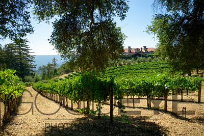 1467_d800a_Byington_Winery_Los_Gatos_Commercial_Photography