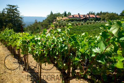 1451_d800a_Byington_Winery_Los_Gatos_Commercial_Photography