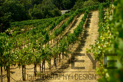 0375_d800b_Byington_Winery_Los_Gatos_Commercial_Photography