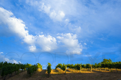 0228_d810a_Byington_Winery_Los_Gatos_Commercial_Photography