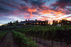0293_d810a_Byington_Winery_Los_Gatos_Commercial_Photography