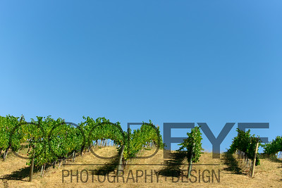 0383_d800b_Byington_Winery_Los_Gatos_Commercial_Photography