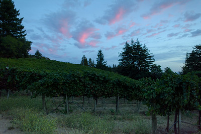 0296_d810a_Byington_Winery_Los_Gatos_Commercial_Photography