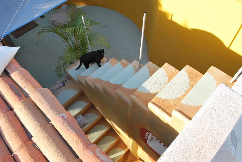 Painter follows me wherever I go - good cat!