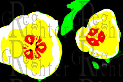Yellow tulips, pop art.