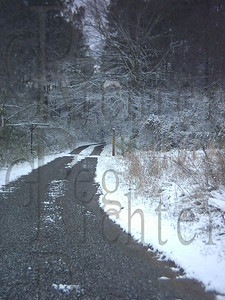 Road through the snowy woods.