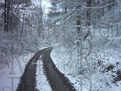 Road through the snowy woods