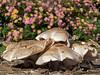 Mushroom2828