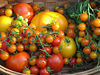 Cornucopia of tomatoes from our garden. We had a good crop this year. Canon A610