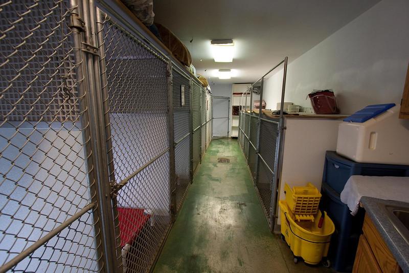 "8 ""large"" kennels on left, 5 medium on right"