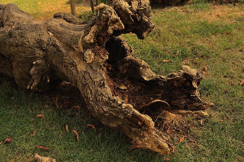 Dřevěné torzo
