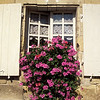 Colorful Window Box, Gate House, Château D'Ussé, Indre-et-Loire, France