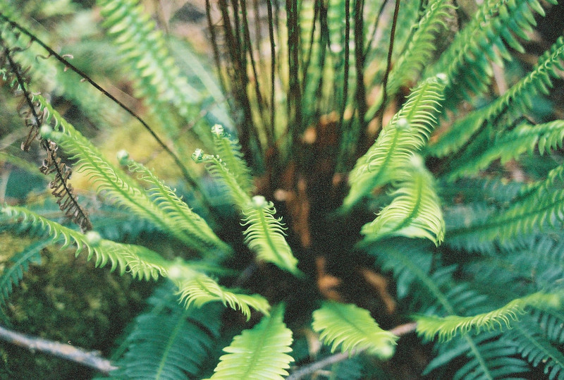Lots of ferns in the understory.