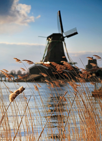 Zaanse Schans Windmills, Zaanstad, Netherlands. With grass and river in foreground and very shallow depth of field.