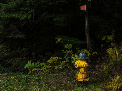 Hydrant and Path