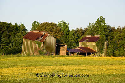 Dilapidated Tobacco Barns, Pitt County, North Carolina