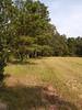 Cedar Ave. pasture.