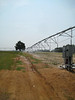 Irrigating cotton and peanuts.