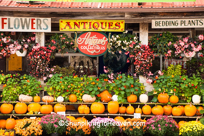 Pumpkin Display at Village Greenhouse, Gays Mills, Wisconsin