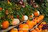 Pumpkin Display at Village Greenhouse, Gays Mills, Wisconsin