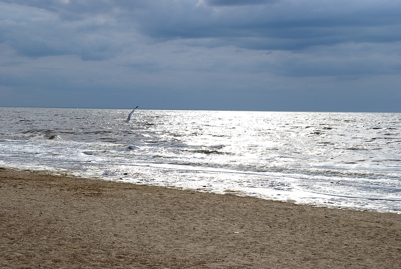 Seagull above North Sea