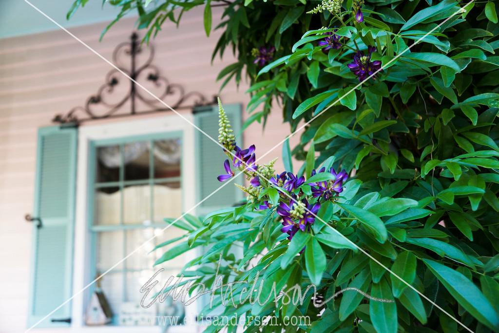 vine and window BSL 0282