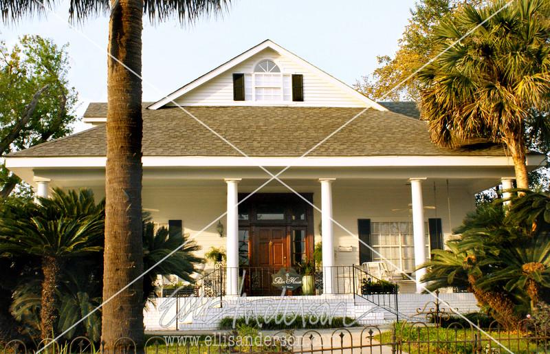 Palm House 3498