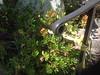 Exterior stair rail detail - Lilliano Dr., Sierra Madre, CA