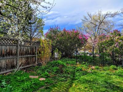 Yard during spring