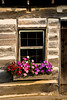 Log Cabin Window and Petunias, Clayton County, Iowa