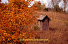 Autumn Outhouse, Manitowoc County, Wisconsin