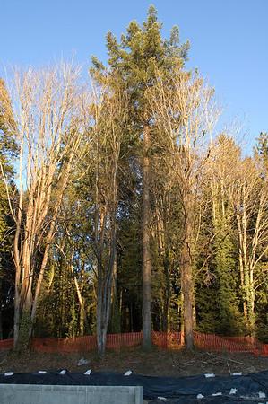 trees1398
