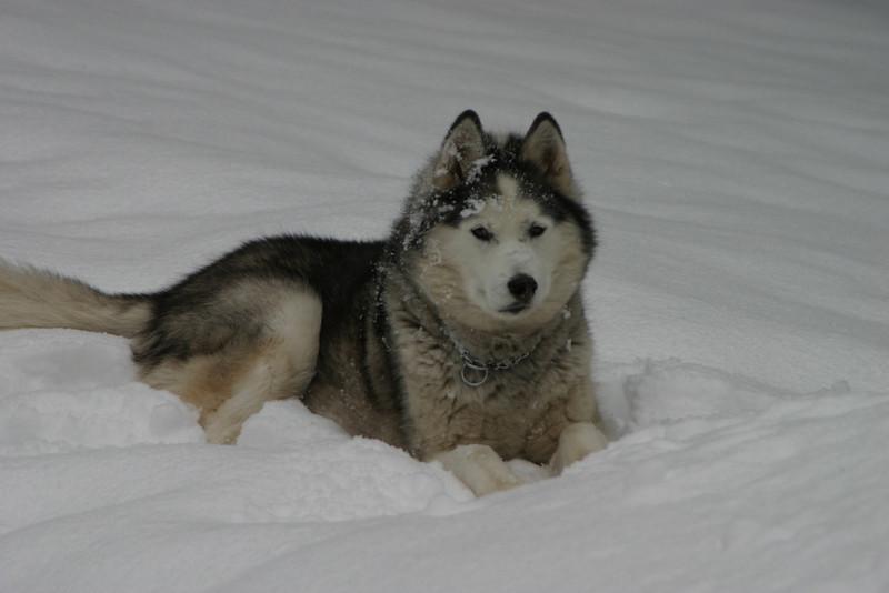 Tucker,a good dog.
