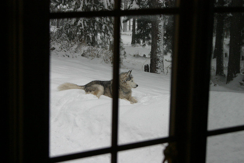 Tucker, happy in the snow