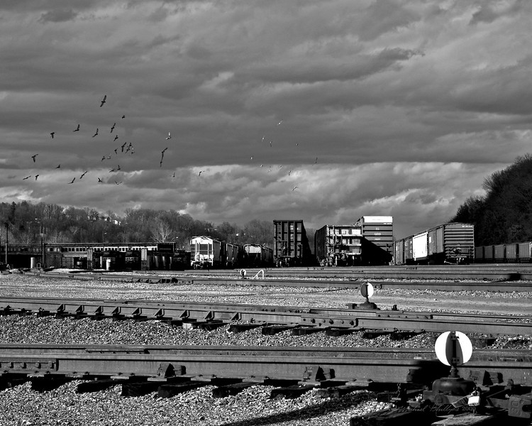 A wonderful backdrop of cloud cover provides a moody scene as birds fly, swoop, and play over a train yard.