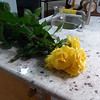 My wonderful neighbor brought me over six gorgeous long-stemmed fragrant roses from his garden.  Beautiful!  Don't they look great against the new counter?