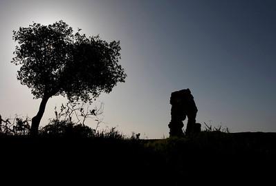 Crumbling ruins of Knapp Castle just outside of Santa Barbara, CA at sunset.