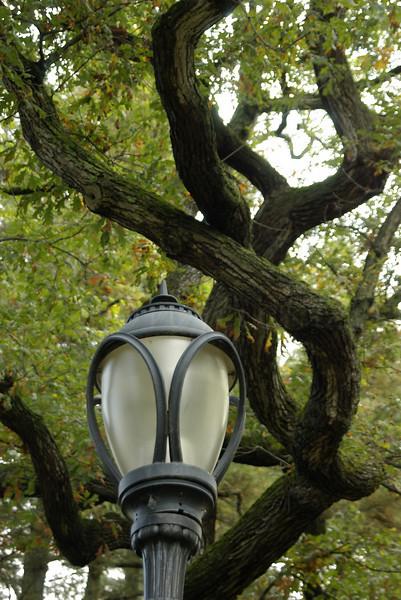Street Light and Tree