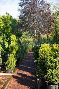 Langs_Garden-14