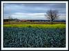 Felder im frühen Winter