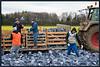 Teamarbeit bei der Blaukrauternte