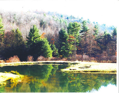 The pond out in front of the cabin.